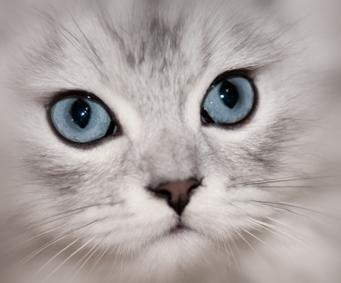 merlegkepestanoncok-szamvitel-cica